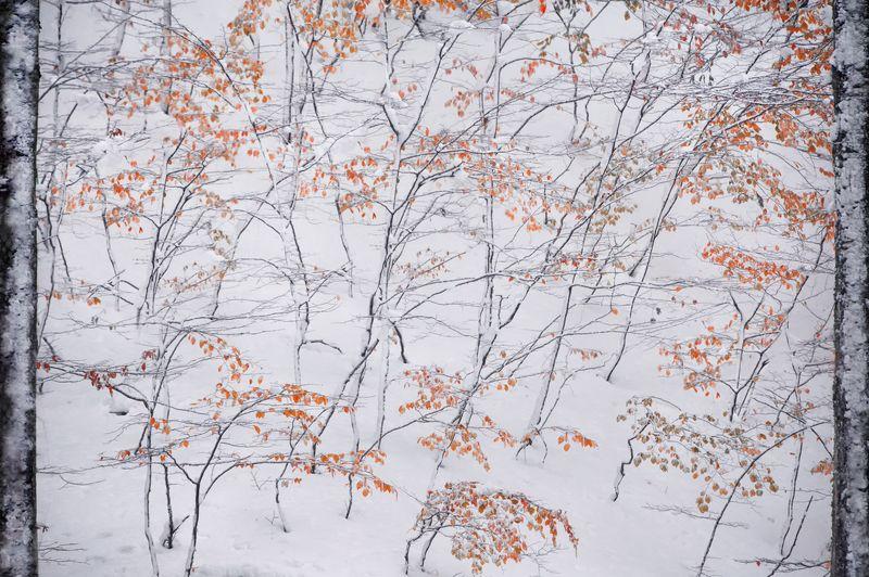 пейзаж,крым,осень,путешествие,природа,зима,лес,обои,фотообои,снег,листья,россия Крымский ноябрьphoto preview