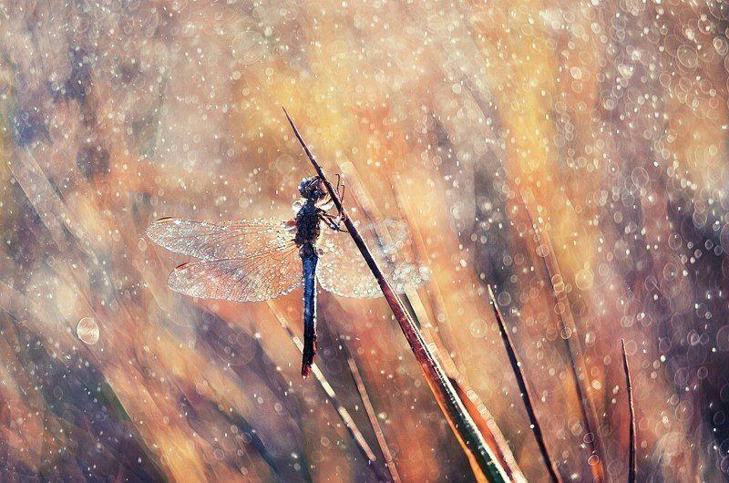 макро, природа, стрекоза, цвета, лето, тепло Летним утромphoto preview