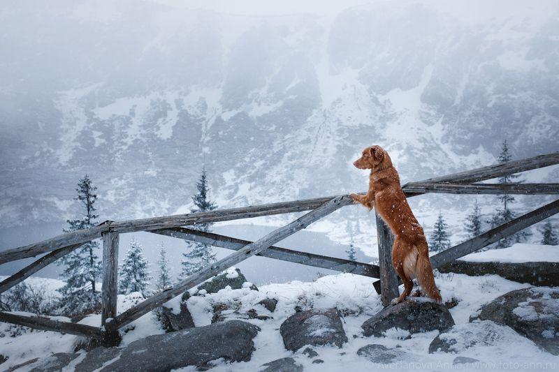 собака, природа, горы Зима в горахphoto preview