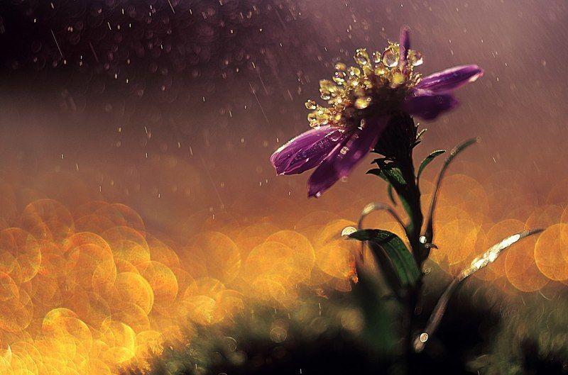макро, цветы, цвет, красиво, гелиос, Яркие сныphoto preview