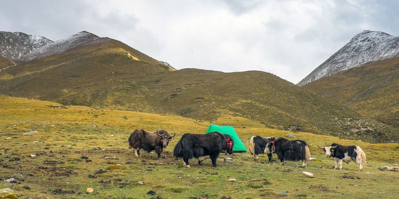 Tibet China Tibet 2014photo preview
