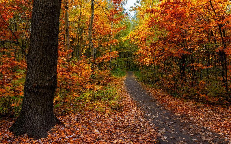 landscape, пейзаж,  деревья,  природа, осенние листья,  осень,   прогулка, осенние краски, дорожка, парк, опавшие листья прогулка в осеньphoto preview