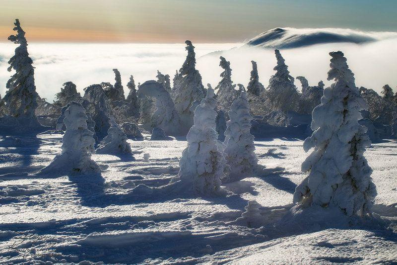 таганай, зима, южный урал Уснувшие до весны.photo preview