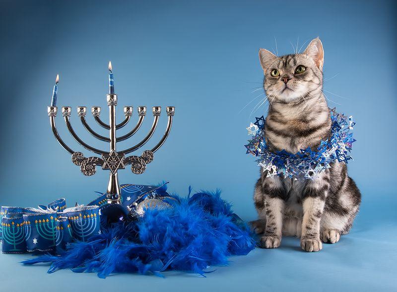hanukkah,ханука, cвечи, свеча, праздник, кот, домашние любицы, сat, кошка, чёрный кот, black cat, кузя,ragdoll cat, ragdoll,  рэгдолл, ragdoll, американский короткошерстный кот, american shorthair cat, рыжик, ginger Ханука! Первая свеча.Happy Hanukkah!photo preview