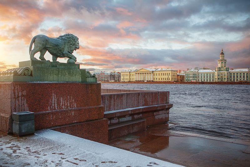 питер, санкт-петербург, зима, мороз, река, нева, рехов, сергейрехов, rekhov, sergejrekhov Львы Санкт-Петербургаphoto preview