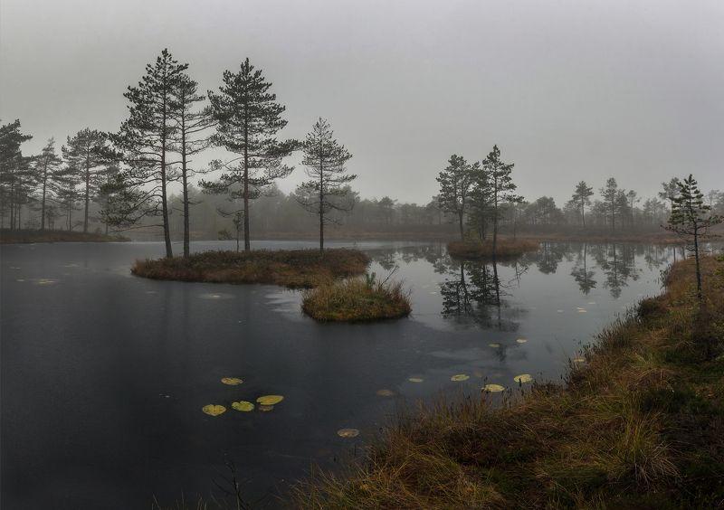 утро, туман, озеро, ленинградская обалсть, мороз Тихое утро на лесном озереphoto preview