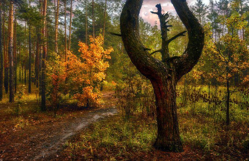 landscape, пейзаж,  лес,  деревья,  природа, осенние листья,  осень,  сосны, тропинка, прогулка, осенние краски, вечер осенним вечеромphoto preview