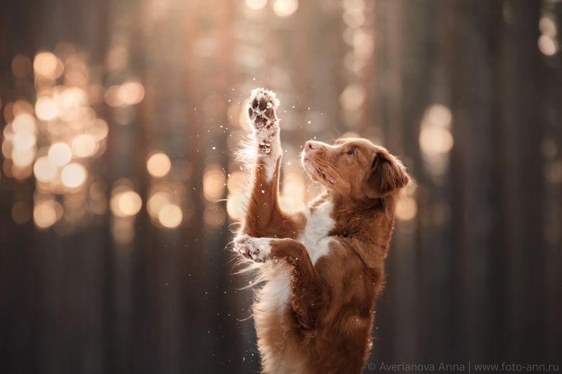 собака, природа, зима photo preview