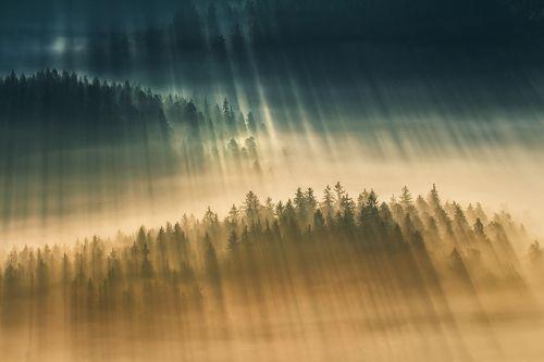 Nature's Golden Light.