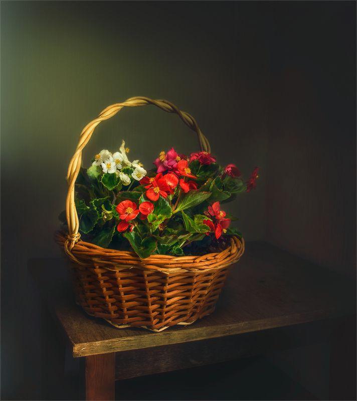 still life, натюрморт,    растение, природа,  винтаж, корзина, плетеная корзина, цветы, бегония, минимализм корзинка с цветамиphoto preview