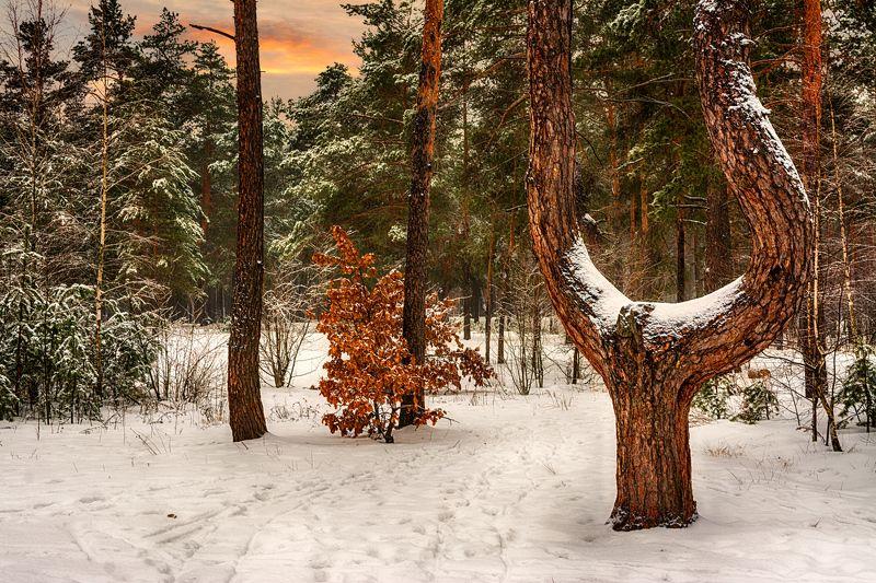 landscape, пейзаж,  лес,  деревья,  природа, вечер, снег вечер в лесуphoto preview