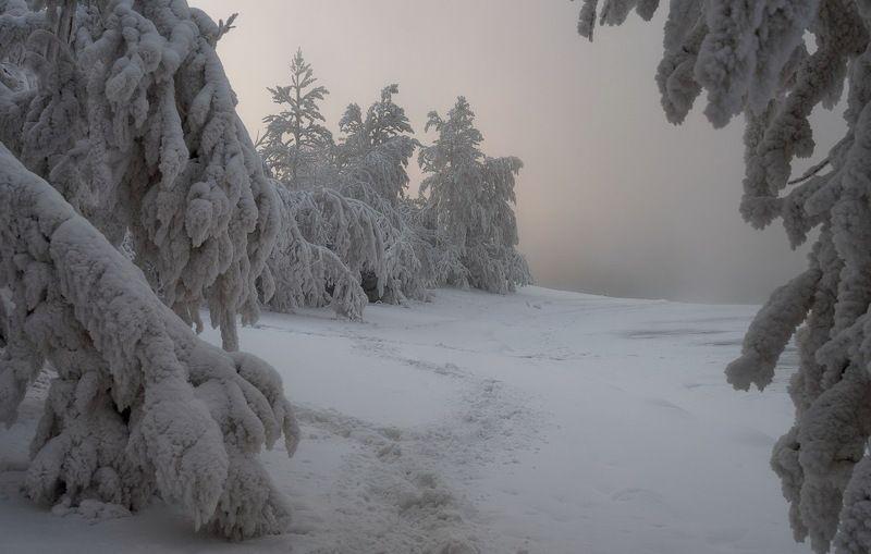 зима. изморозь. мороз. енисей. Когда  стояли морозы.photo preview
