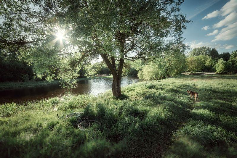 украина, коростышев, фотограф, природа, весна, солнце, блики, трава, зеленый, тропинка, собака, теплый, река, берег, велосипед, \