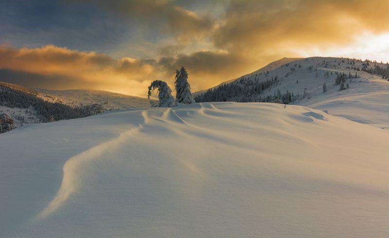 Winter beautiesphoto preview