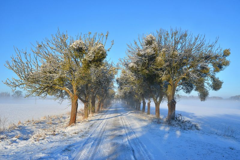winter morning road white poland trees mist sun light snow zima снег Winter morning on the roadphoto preview