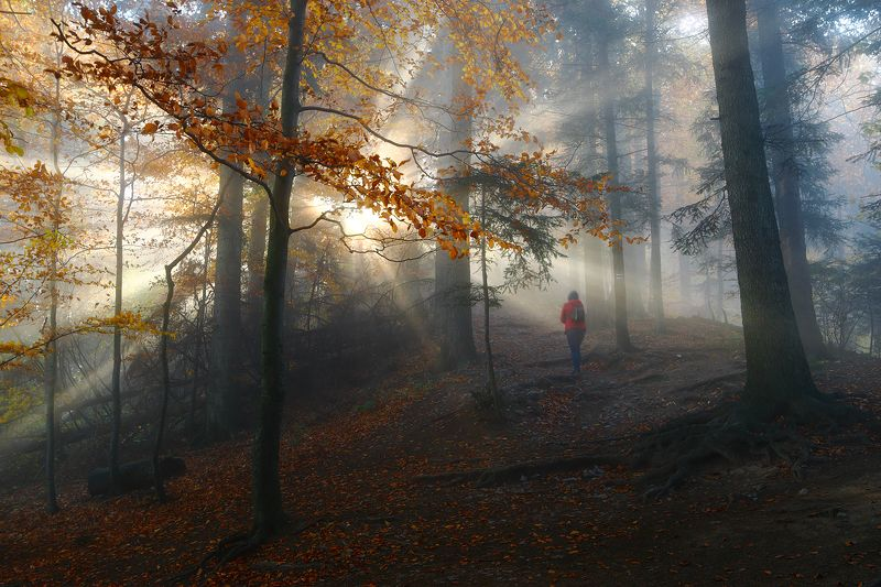 mist, mood, forest, morning, trees, light, trail, On the forest trailphoto preview