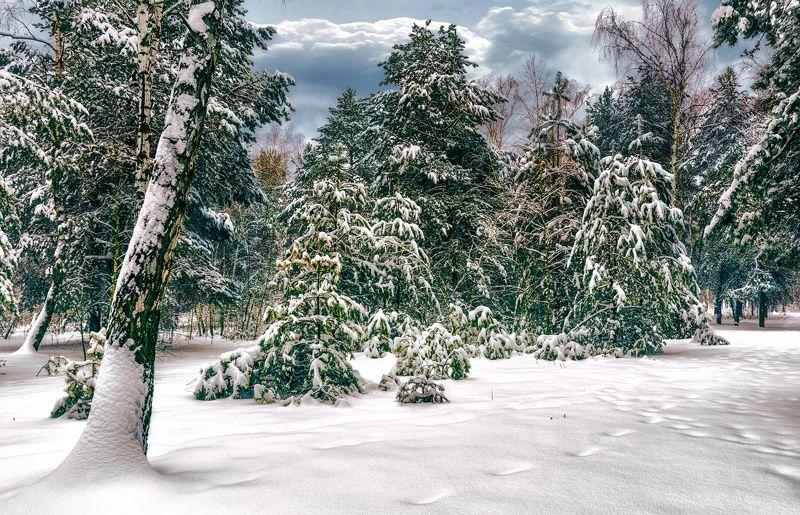 landscape, пейзаж,  лес,  деревья,  природа, березы,  сосны, прогулка, снег, зима, зимние картинкиphoto preview