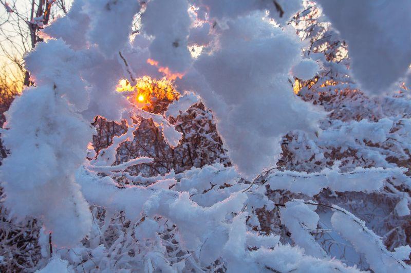 зима,россия,оренбуржье,пейзажи,природа Прогулки по зимнему лесуphoto preview