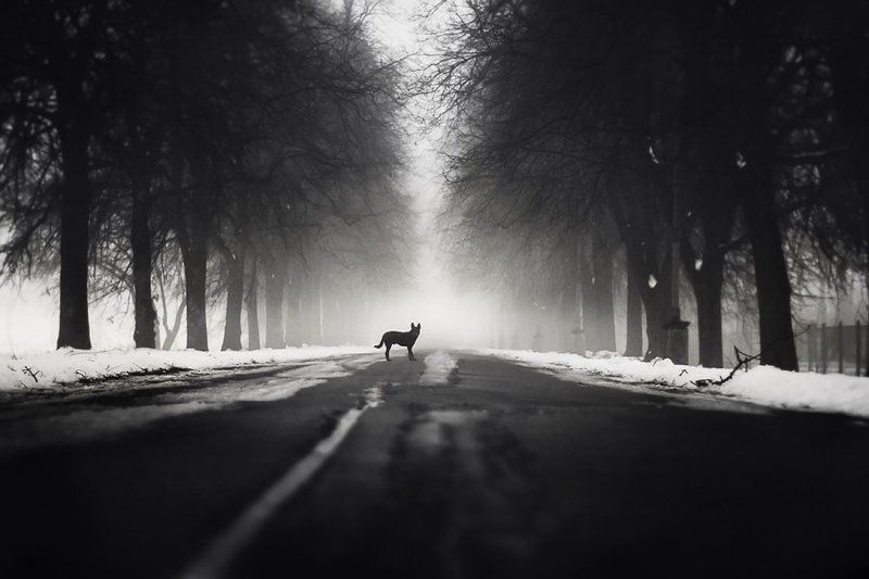 dog, fog, park, bw, black, dog, myth Follow mephoto preview