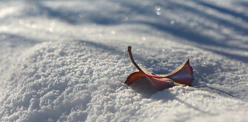 природа, макро, зима, снег, белый, боке, опавший лист ***photo preview