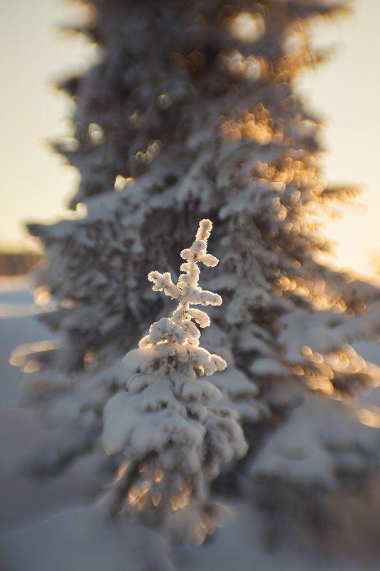 Зимний рисунок \
