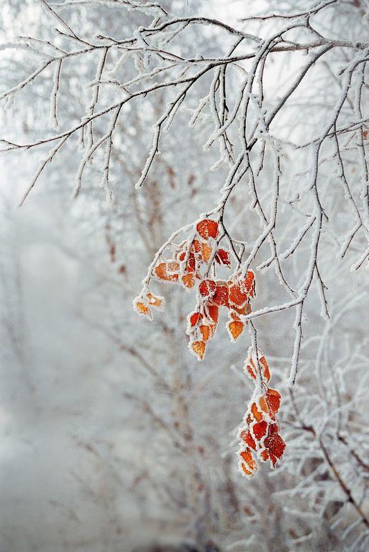 орск оренбургская обл. качурин новотроицк южный урал Остатки осени или победа Зимы!photo preview