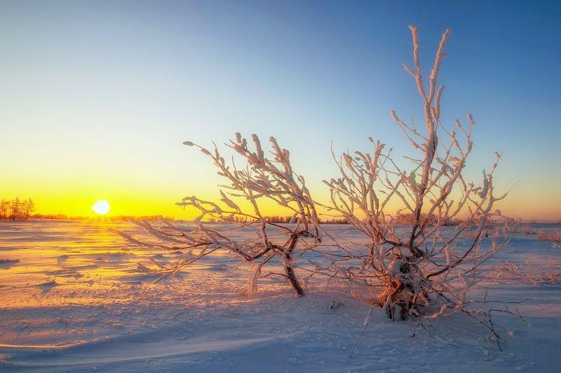 В снежном плену photo preview