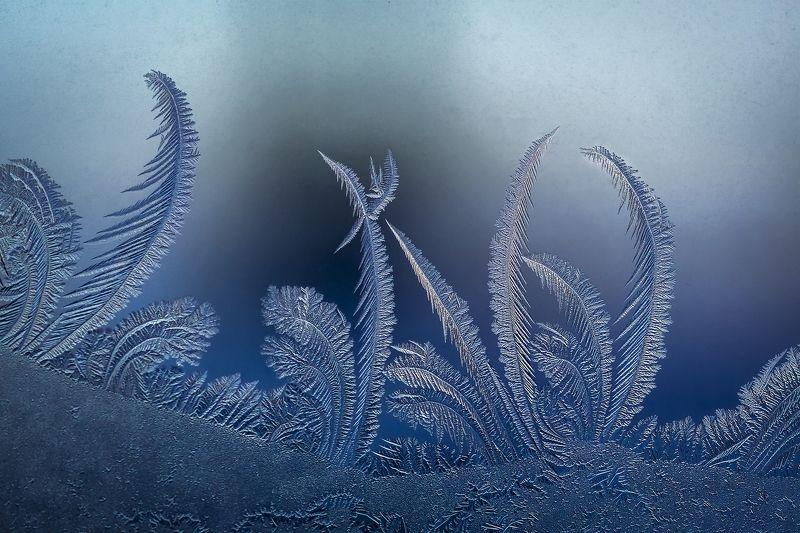 Лед витрин голубыхphoto preview