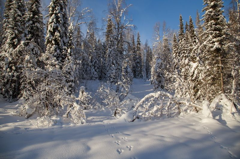 сибирь, зима, снег, кузбасс, природа, пейзаж, лес, Фотоохота на снег!photo preview
