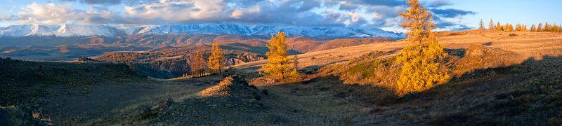 горы, лиственницы, утро, курай, северо-чуйский хребет, горный алтай, республика алтай Pro золотое утро Кураяphoto preview