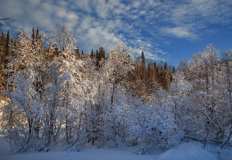 сибирь, зима, снег, кузбасс, природа, пейзаж, лес, Тёплое в холодном..!photo preview
