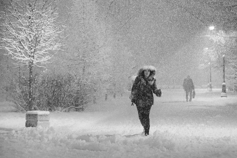 снегопад, снег, метель, старик, фонарь, зима, парк победы, парк, кусты, деревья Дорога домойphoto preview