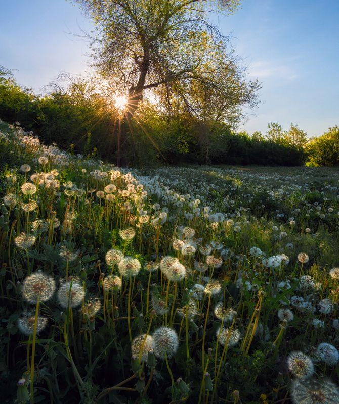 цветы Немного о прошедшем лете.photo preview