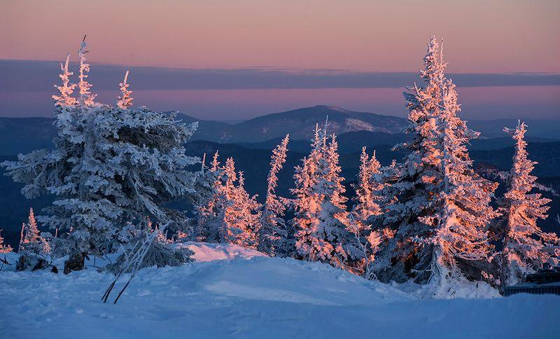 зима, снег, пихты, склоны, розовый вечер, с новым годом, гора, зелёная, шерегеш, горная шория, сибирь Розовый вечер или с Наступающим новым годом!photo preview