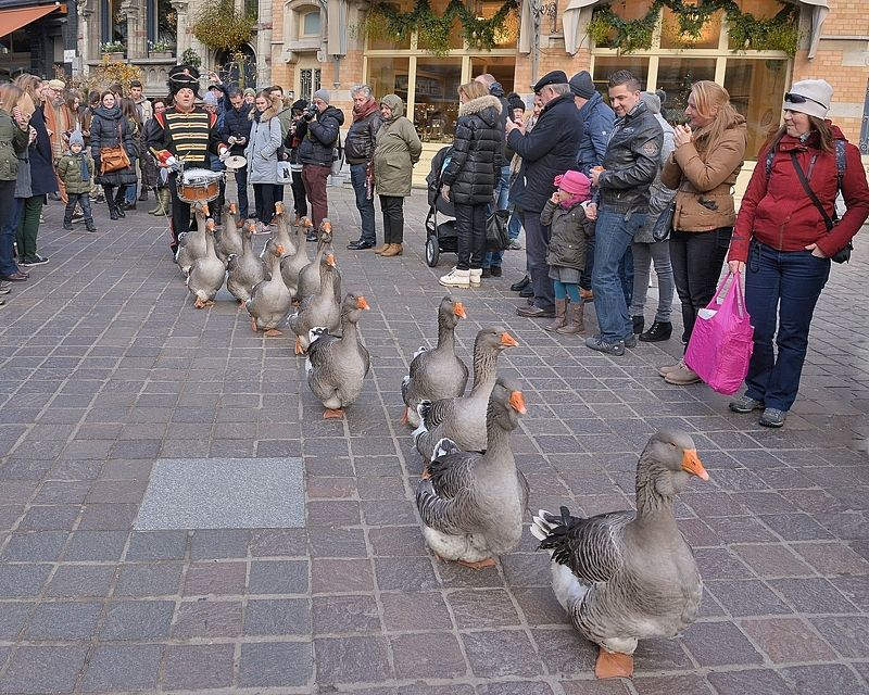 The dancing geese.photo preview