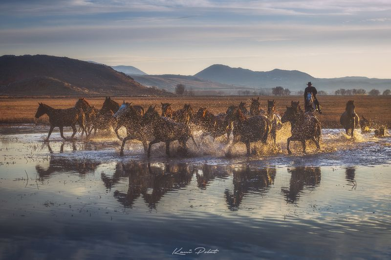Yilki horsesphoto preview
