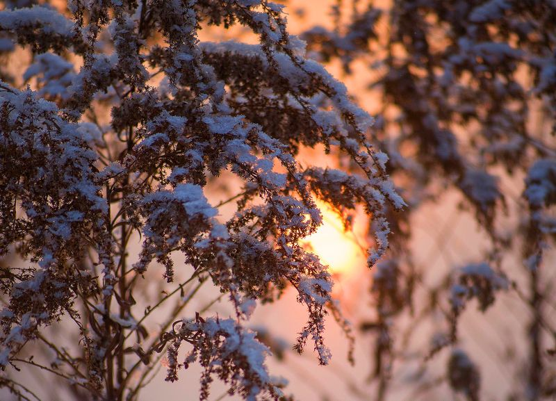 зима, кузбасс, солнце, дача, Запуталось в траве Солнышко...;)photo preview