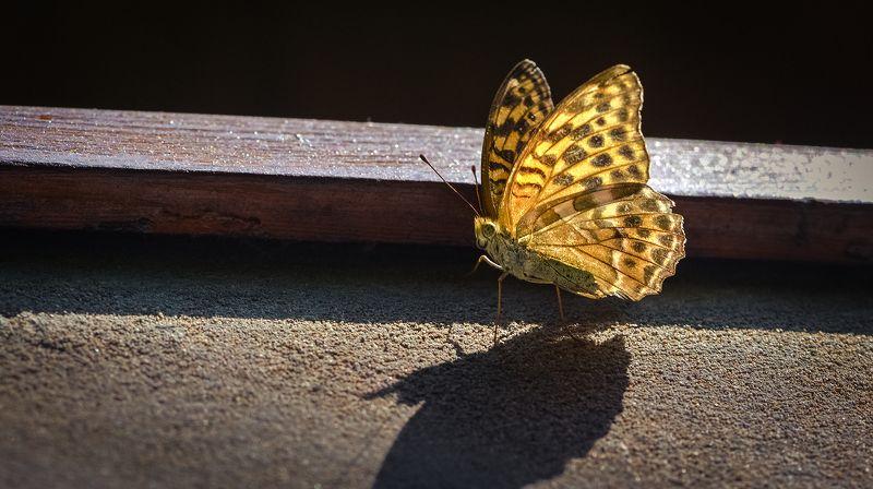 природа, макро, бабочка, стена Барьерphoto preview