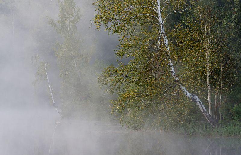 Сентябрьская туманная с березкамиphoto preview