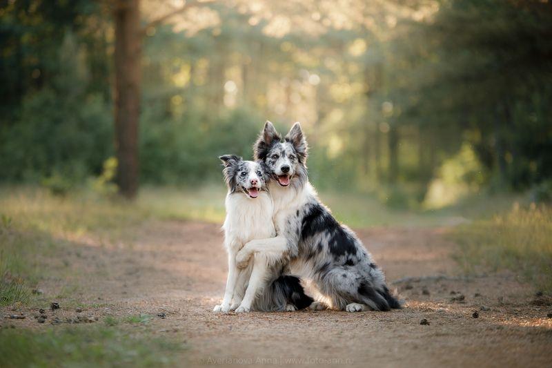 природа, собаки Друзьяphoto preview