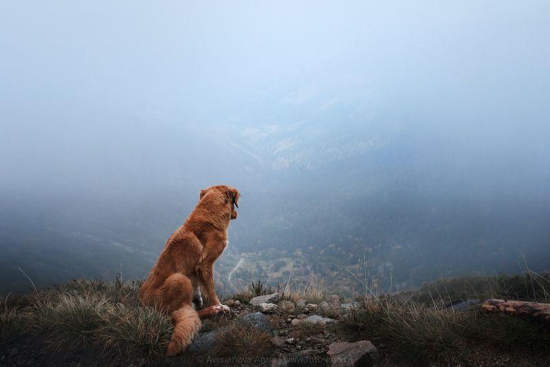 собака, горы в горахphoto preview