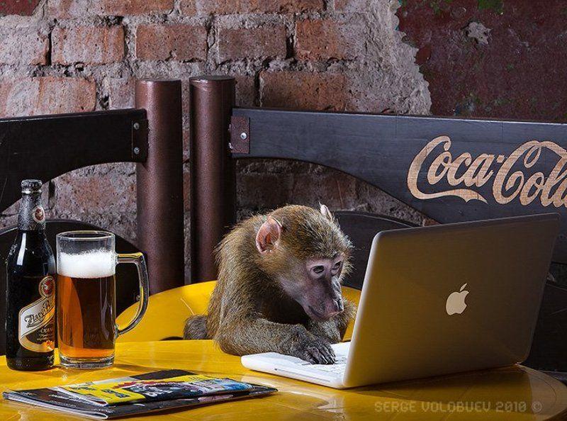 мак, обезьяна, павиан, компьютер, ретач, компьютерная, ретушь, пиво, стол, макбук, кафе компьютерная ретушь. дорого. пафосно. обращаться в зоопарк, 5-й павильонphoto preview