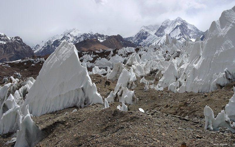 горы, каракорум, китай, ледник, гашербрум, туризм, альпинизм Весь покрыт кальгаспорами, абсолютно весь.photo preview