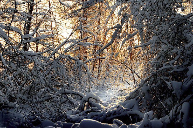 зима, снег, ветви, вечер В ветвях заблудились рефлексыphoto preview