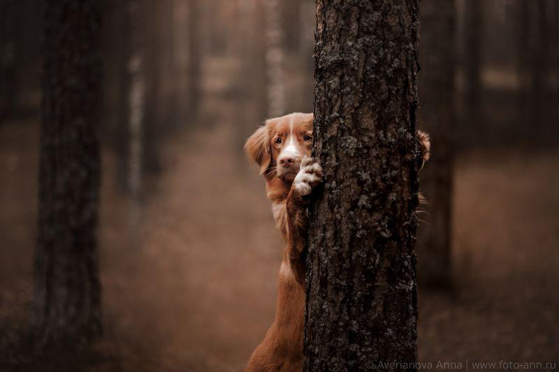 собака, лес, природа спряталась) photo preview