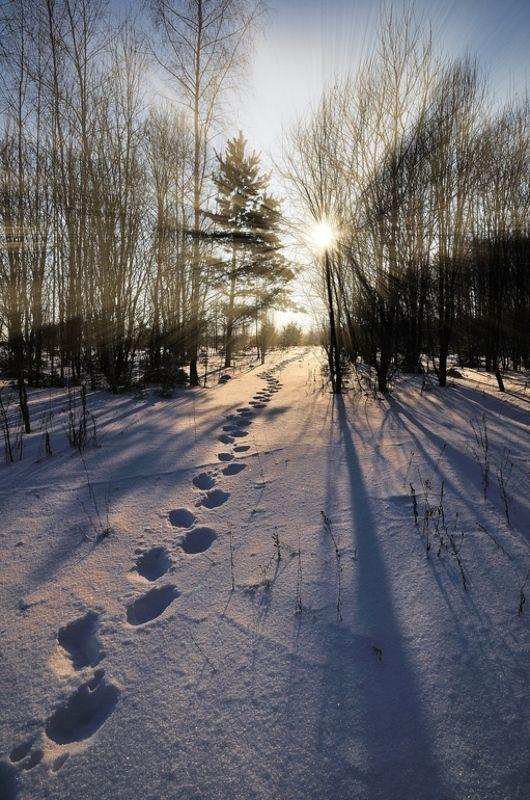 зима, солнце, лес, следы Зимнее путешествие за солнцемphoto preview