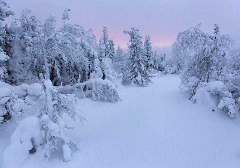 зима, горы, урал, деревья, снег, рассвет, тишина, путешествия, лес, антон селезнев Северный рассветphoto preview