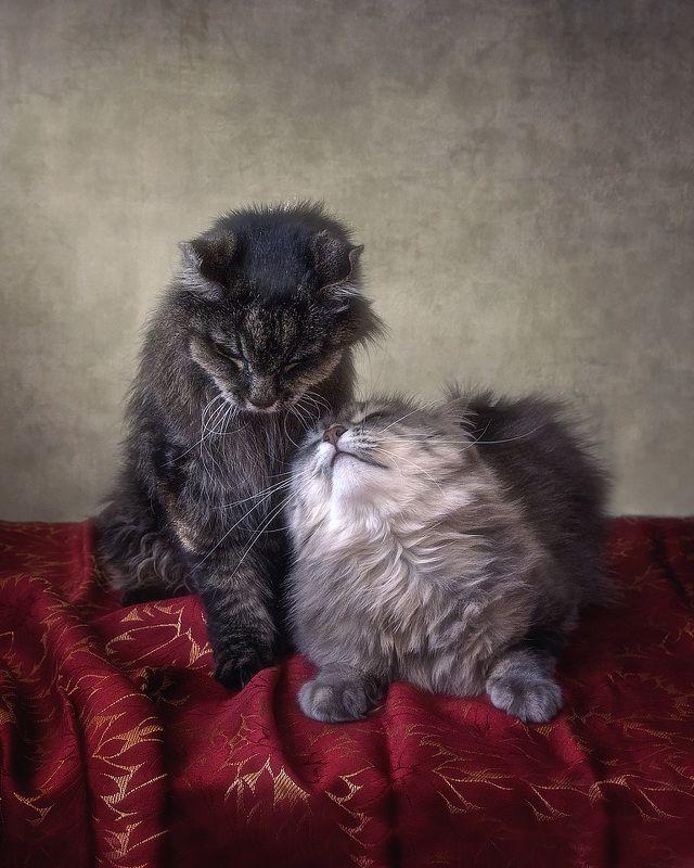 кошки, домашние животные, отношения, нежность, кот Мейсон, кошка Масяня. Не бойся, я с тобой!photo preview