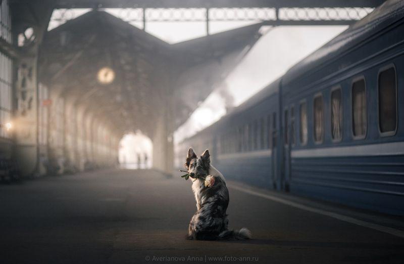 собака, вокзал, история В ожидании встречиphoto preview