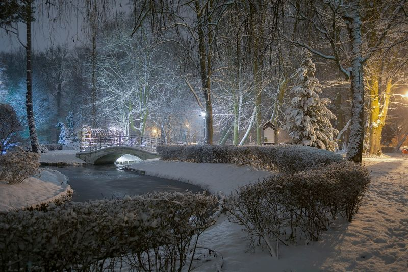 park,winter,even,nikon,trees,pond,illumination,snow,landscape,nature, Park in the winterphoto preview